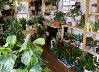 Plant People shop
